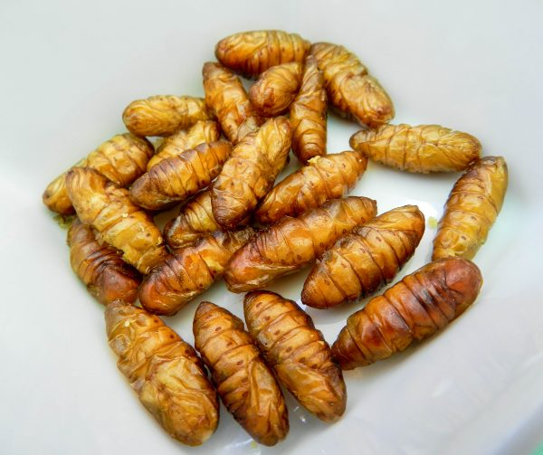 HISO_Edible_Insects_Silkworm